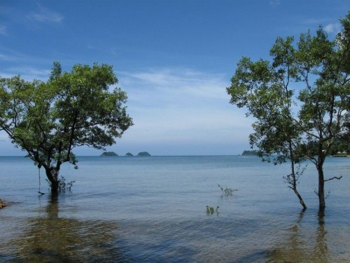 Kho Chang Lonely beech