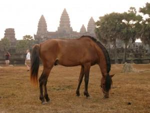 Ангкор. Лошадка