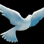 Голубь — символ мира, чистоты и… плотских утех.