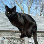 Черный кот. Почему мы его боимся?