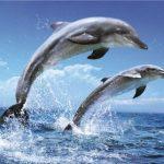 Дельфинарии — тюрьмы для дельфинов. 12 фактов в защиту дельфинов.
