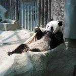Чианг Май. Зоопарк. Панды, коалы, гиббоны и белый тигр.