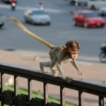 Фото с обезьянкой на руках — соучастие в преступлении