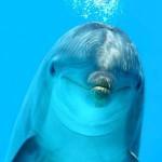 Долфин-шоу или Сон дельфина.