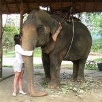 Покормить слона.