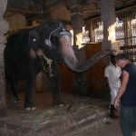 День Слона отметили блинами!