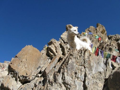 Dog_Himalaya_small
