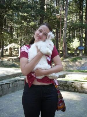 Himalaya-Rabbit