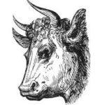 Рога — символ сексуальной силы и кто такие рогоносцы?