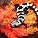 Об отношениях саламандр и скорпионов с всепоглощающим пламенем.