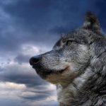 15 наиболее абсурдных заблуждений о животных