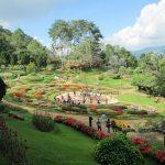 Вдохновение тайских гор-4. Рододендроны вместо опиума.
