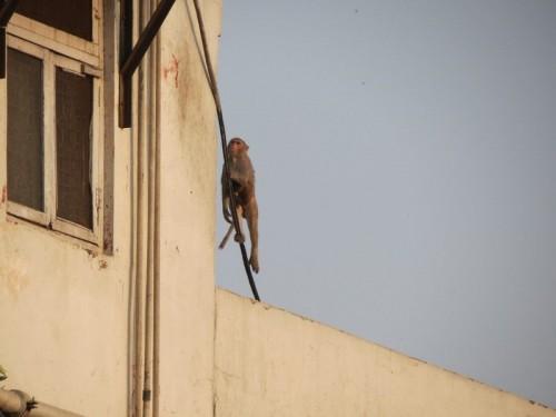 Monkey_Hotel