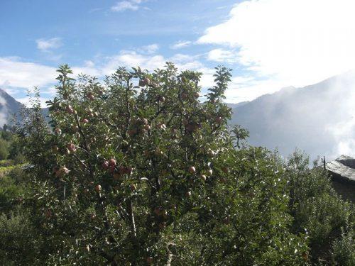 Apple_Garden
