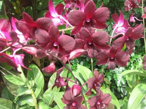 Singapure_Botanic_Garden
