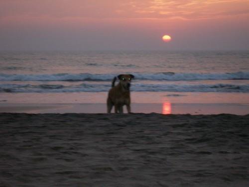 Dog_Goa