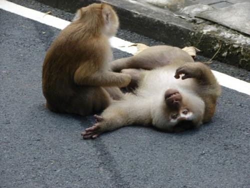 Monkey_Hill