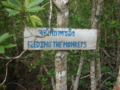 Monkey. Phuket