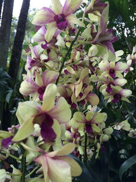 Singapur_Botanic_Garden