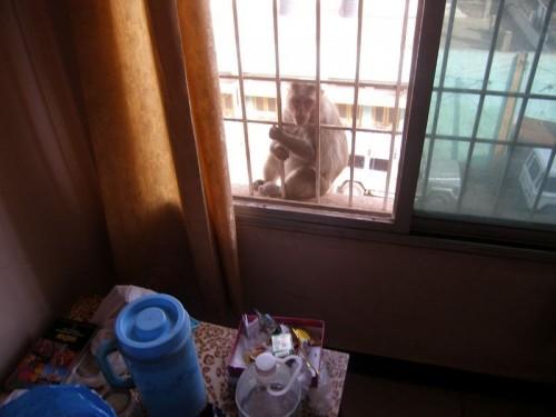 Monkey_Badami