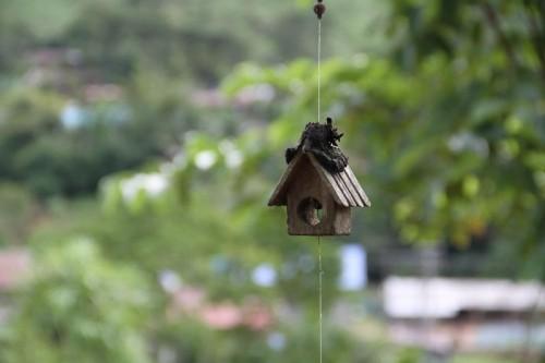 Birds_House