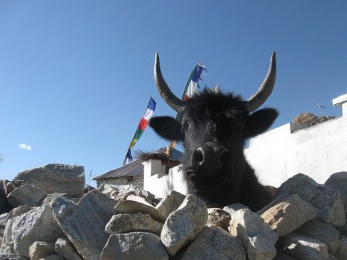 Tibetian_food