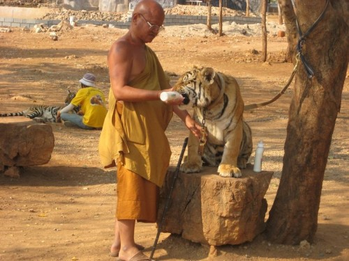 Tiger_and_Monk