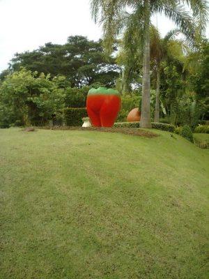 Erotic_Garden9