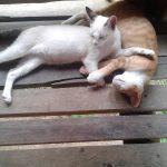 О котиках